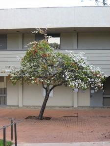 Покрасневшие листья и цветение - необычная комбинация
