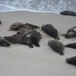 Там, говорят, одна тюлениха рожала в этот момент, и все ждали когда же это произойдет