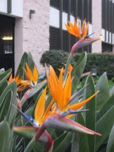 Этих цветов тут, кстати, навалом растет