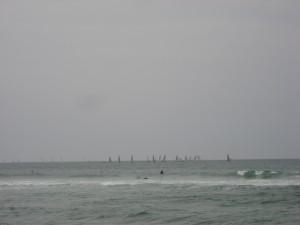 На фотографии два серфера и еще одно морское животное. Найди его.