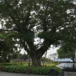 Мангровые деревья клевые