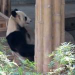Зоопарк в Гуанчжоу довольно маленький