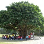 Уставшие туристы прячутся от палящего декабрьского солнца под сенью мангрового дерева