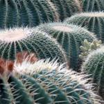 Клевые кактусы