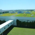 На крышах модернизированной фабрики растёт современная трава