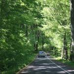 Дорога через национальный парк