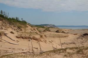 На дюне торчат остатки какого-то мертвого леса