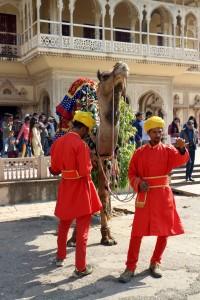 Можно покататься на верблюде